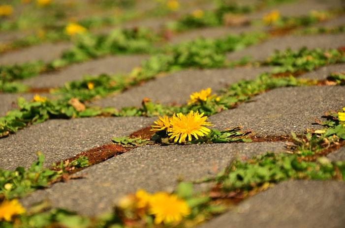 pavimento sostenible